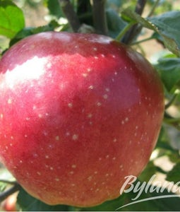 Hardi-mac Apple 7 Gallon Pot