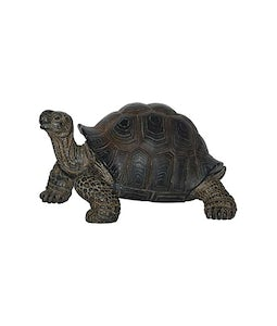 Border Concepts Baby Tortoise 3.75In