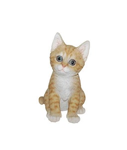 Border Concepts Ginger Kitten 7.75In