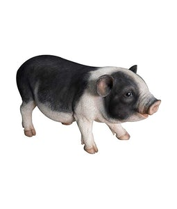 Border Concepts Pot Bellied Pig 17In
