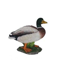 Border Concepts Mallard Duck 12.5In