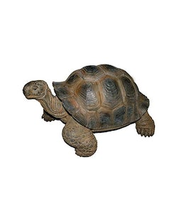 Border Concepts Sm Giant Tortoise 12.25In