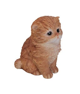 Border Concepts Persian Kitten Ginger 6.5In