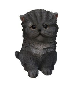 Border Concepts Persian Kitten Blue 6.5In