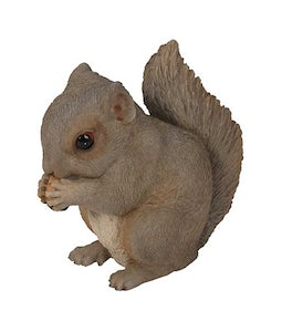 Border Concepts Baby Grey Squirrel 5.5In