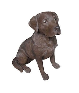 Border Concepts Chocolate Labrador 8.5In