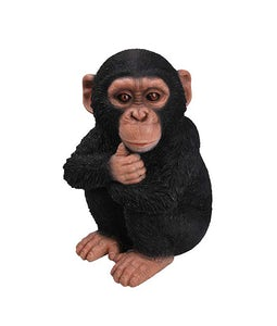 Border Concepts Baby Chimpanzee 12.25In