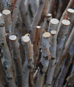 Decorative Birch Stem 3Ft