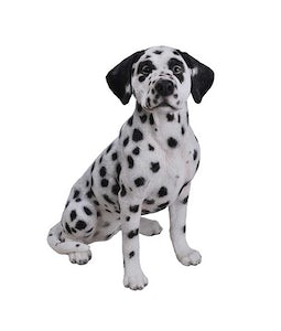 Border Concepts Dalmation 20inH