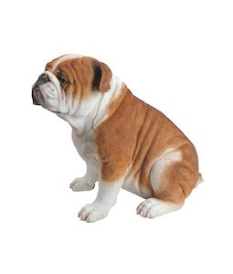 Border Concepts Sitting Bulldog15.75inh