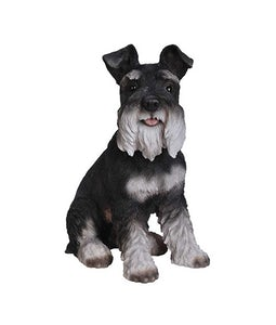 Border Concepts Black And White Miniature Schnauzer 13.75In