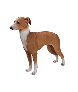Border Concepts Greyhound 19.75inL