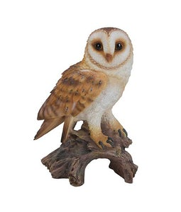 Border Concepts Little Barn Owl 7In
