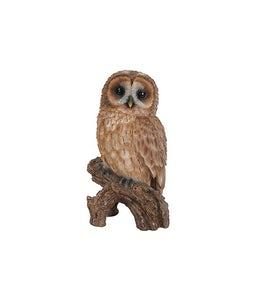 Border Concepts Little Tawny Owl 6.75In