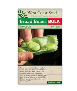 West Coast Seeds Windsor Beans