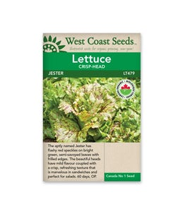 West Coast Seeds Lettuce Jester