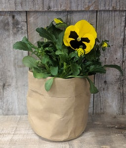 WASHABLE KRAFT PAPER PLANTER MEDIUM
